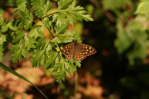 Papillon 2 by tifrize