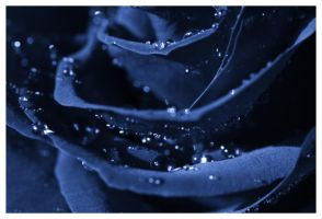 I feel blue... by mmerrique