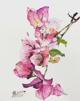 Bougainvillea by ThutDARA