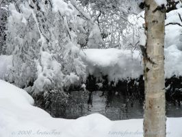 THE SECLUSION OF SNOWY WOODS by 1arcticfox