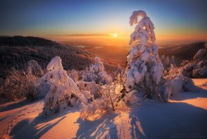 Bent to the Sun by FlorentCourty