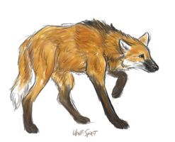 skecth - Maned Wolf by Wolf-Spirit89
