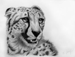 Cheetah by KarinaLoveDubai