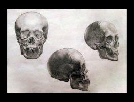 Skulls: frontal, profile, three-quarter by FidgetyBudgie