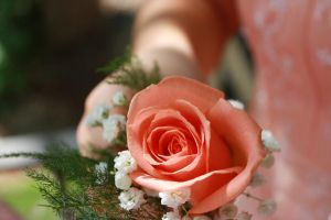 The Peach-Rose Boutonniere by lamarble