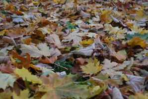 Leaves everywhere I by Dorian-Gray7