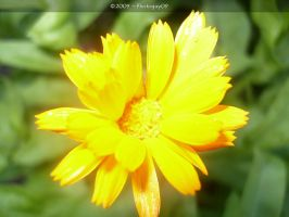Flower11 by Photoguy09