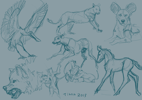 Animal sketches by tigon