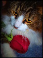 Cats and Roses by BeckyMarie73