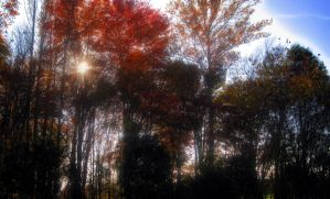 Because I Love Autumn II by Mistshadow2k4