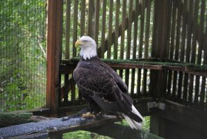 Raptor Center 4 by PirateLotus-Stock