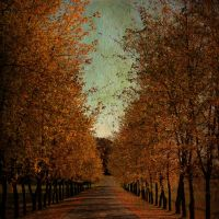 A colourful path by Stargazers-w