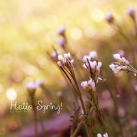 Hello Spring by YamiNoTora