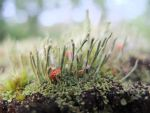 Still life with lichens, moss and fungi by geanera