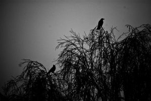 raven.winter.tree. by koksnuss
