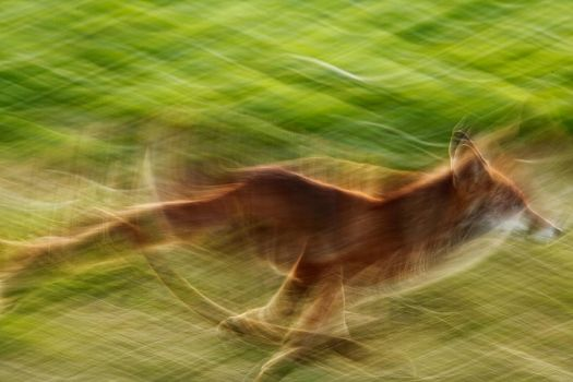 On the run by Addran