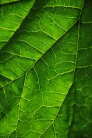 Leaf texture stock 2 by Quinnphotostock