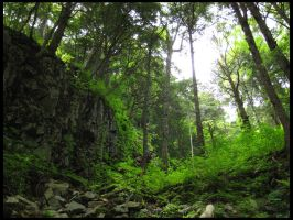 Forest from Below by AntiRetrovirus