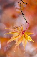 autumn colours 8 by AngiWallace
