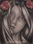 Wild roses by nabey