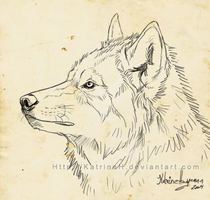 Wolf doodle  VIDEO by KatrineH