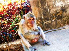 Resting Monkey by HappyTry