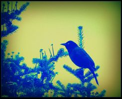 Black Bird On a Branch by surrealistic-gloom