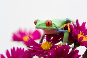 Frog amongst flowers by AngiWallace