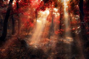 lightscanner by ildiko-neer