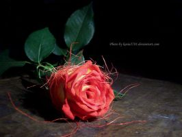 Warm Romantic Rose by kasia2781