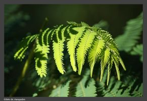 Fern with no frame by Arte-de-Junqueiro