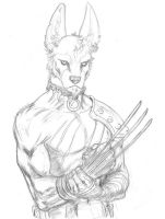 Sketch 63. Jackalman by Dreamerwstcoast