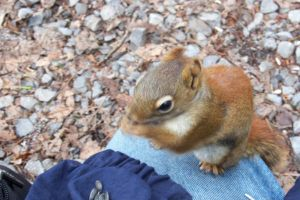 Friendly Squirrel by philippeL