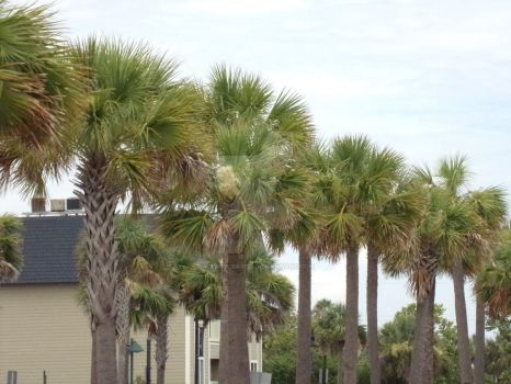 Palmetto Trees by Warfreaksis2