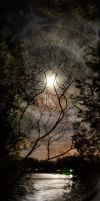 Nocturnal by digitalreflexion