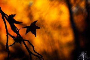 Burning Heart Of Autumn by JustinDeRosa