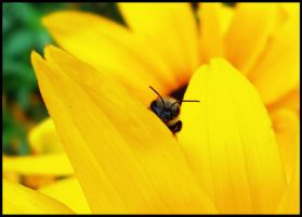Bee by theory6-brian