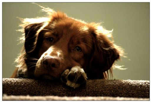 duke the downtrodden dog by eythan