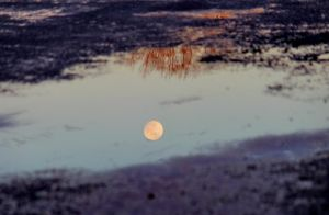 Moon Puddle by swordedsaint