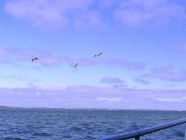 Purple Clouds and Pelicans by bluemangoimages