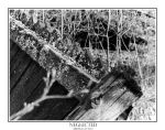 Neglected by Lhungoniel