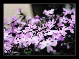 Purple Flowers by MichelleMarie