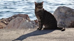 a cat and its shadow by araXne