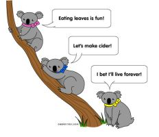 Things koalas might say by coconut-lane
