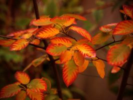 leaves by Bodghia