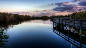 Everglades by RyoThorn