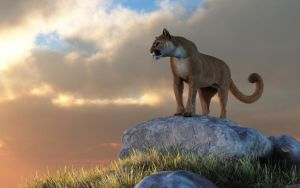 Mountain Lion by deskridge