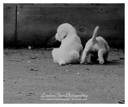 Just You And I by DreamStarPhotography
