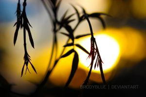 Declared Alive in Absentia by BrodyBlue