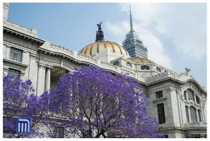 Mexico City by chuydlux
